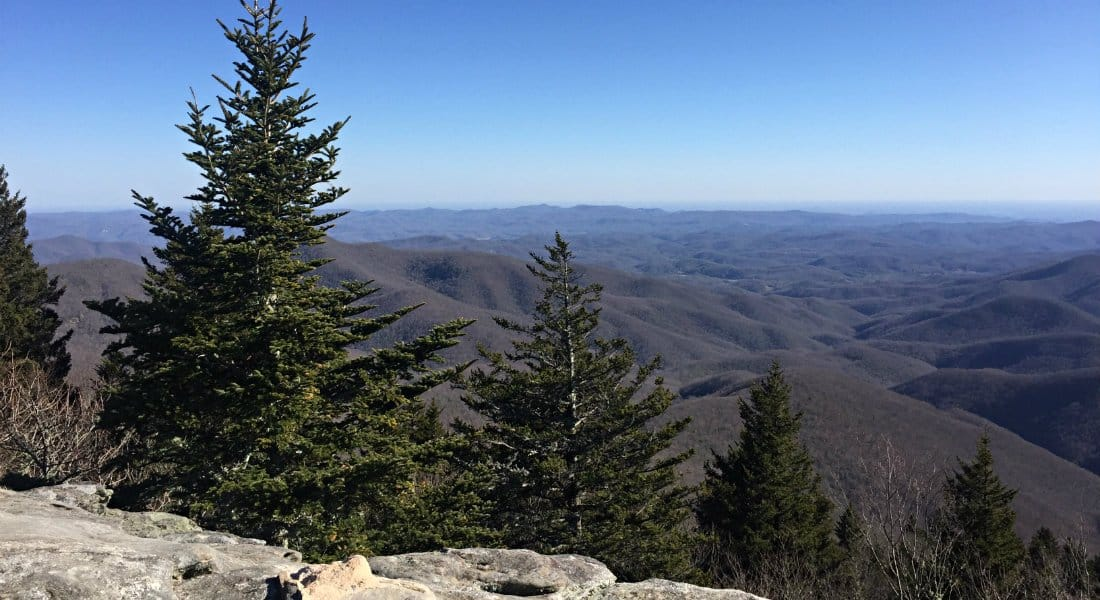 Panoramic view from hillside of tall green pines and blue ridge mountains.