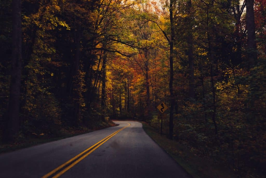 A roadway cutting through a dense, thick forest during autumn.