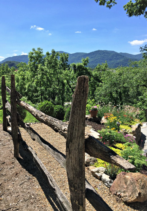Views of the blue ridge mountains in background with old wood fence and lush yellow and green ground cover plantings